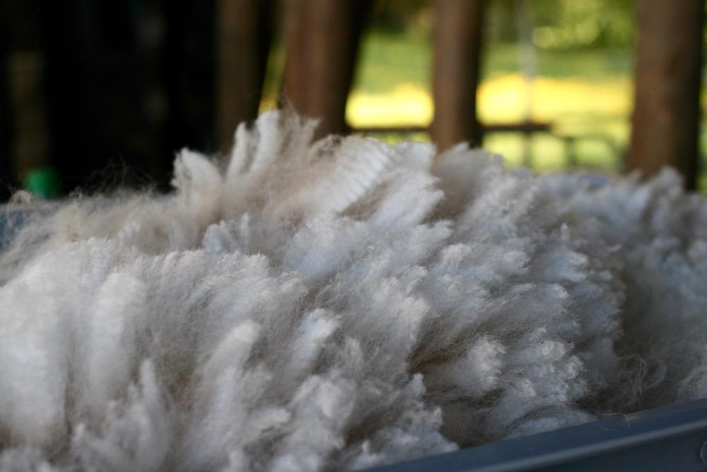 Crimp - Alpaka Vlies. Foto: Sabine Frisch